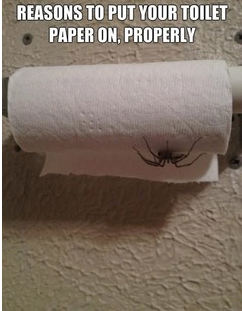 An unintended consequence of bad toilet paper management.